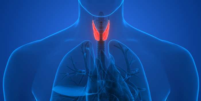 Management of Concomitant Thyroid and Parathyroid Disease